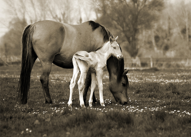 Foal with its mare